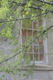 Tree, stone, window. Close up view of tree in front of window of stone building Royalty Free Stock Image