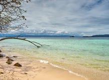 Tunku Abdul Rahman National Park, Borneo, Malaysia - Manukan Island tree stock photo