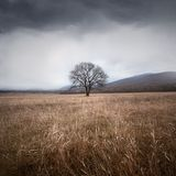 Tree and storm. Autumn forest photographed during the day in the mountains Royalty Free Stock Image
