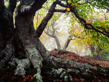 Tree and storm. Autumn forest photographed during the day in the mountains Royalty Free Stock Photos