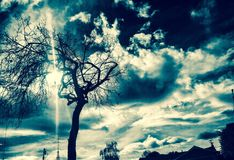 Tree. And storm brewing. Weather stock images