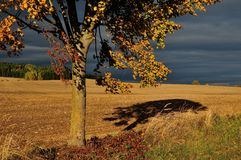Tree and storm clouds. Mowed field and tree and storm clouds Stock Photos