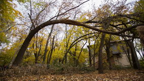 Tree after the Storm. Fallen tree after heavy storm stock footage