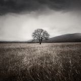 Tree and storm. One tree and storm sky Stock Images
