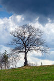 Tree before storm in Plana Mountain Royalty Free Stock Images