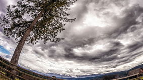 Tree and storm sky. Time Lapse. Tree and storm sky. Time Lapse stock video footage