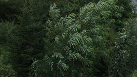 Tree in Storm stock video