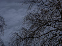 Tree and stormy sky Royalty Free Stock Images