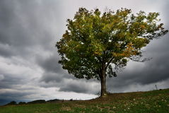 Tree in stormy weather Stock Photography
