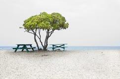Tree, strand och bänkar vid haven Arkivfoto