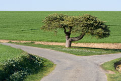 Tree in a strange place Stock Photography