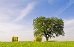 Tree and straw balls Stock Photography
