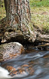 Tree beside stream Royalty Free Stock Images