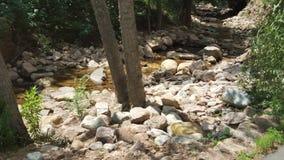 Tree Stream stock photos