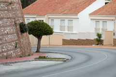 Tree in a street. Decorative lonely tree in a street in Spain Royalty Free Stock Photography