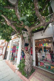 Tree on the street of the old Bourgas in Bulgaria Royalty Free Stock Photo