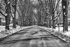 Tree street winter Royalty Free Stock Photos