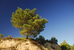 Tree with strong blue sky. Land Royalty Free Stock Image