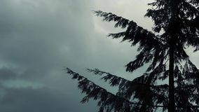 Tree In Strong Wind On Cloudy Day. Large tree sways in the wind in storm stock video footage