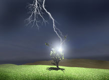 Tree struck by lightning Stock Images