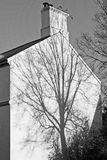 Tree structure outlined as a shadow on a white wall. The shadow of a tree cast on the gable end of an English house in bright sunsine Royalty Free Stock Images