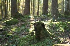 Tree stub Stock Photo