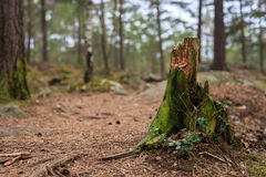 Tree stub with selective focus Stock Image