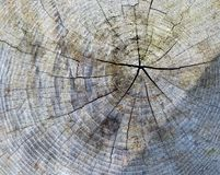 Tree stub texture background royalty free stock photo
