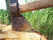 Tree-studded ax pictures suitable for commercial designs. 2 Stock Photos