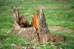 Tree stump Stock Photos