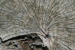 Tree Stump Royalty Free Stock Images