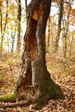 Tree Stump Stock Photos