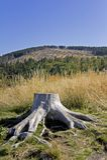 Tree Stump Stock Photo