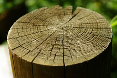 Tree stump. Close-up - shallow dof Stock Photo