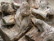 Tree stump. An old decayed tree stump Stock Image