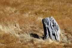 Tree Stump. In golden grass Stock Image