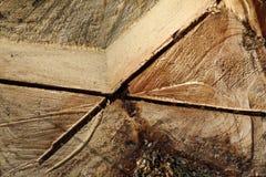 Tree stump Royalty Free Stock Photo
