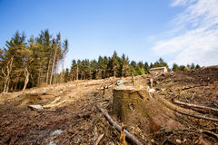 Tree Stump. A clear cut block with a tree stump in the foreground Stock Photos