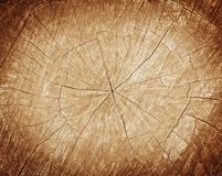 Tree stump background Royalty Free Stock Photography