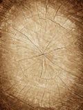 Tree stump background Royalty Free Stock Photography