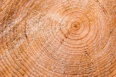 Tree Stump Background. Freshly cut tree stump as a background  From a spruce tree (genus picea Royalty Free Stock Images