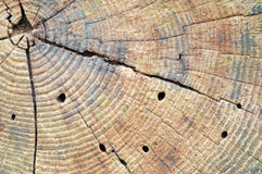 Tree Stump Background Stock Images