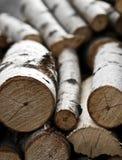 Tree Stump Background Stock Photography