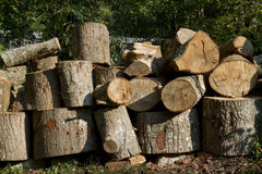 Tree stump background. Pile from marple wood stumps royalty free stock photography