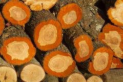 Tree stump background. Pile from prune wood stumps stock image