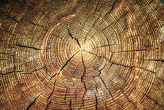 Tree stump background Royalty Free Stock Image