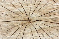 Tree stump background Royalty Free Stock Image