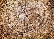 Tree Stump Background Royalty Free Stock Photos