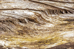 Tree Stump Background Royalty Free Stock Images