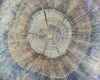 Tree Stump Background Royalty Free Stock Photo